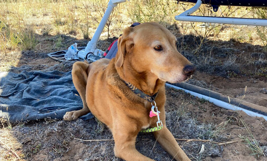 """""""Tired, thirsty, and hungry"""" dog rescued after surviving plane crash and spending days alone in Arizona wilderness"""